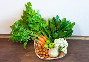 新鮮野菜のイメージ
